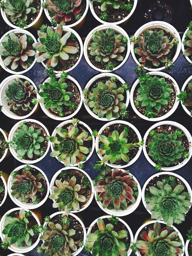 succulent yard