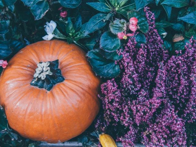 halloween-photo-9779