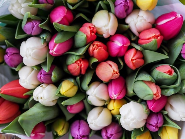 Spring has Sprung: Seasonal Flowers for your Home